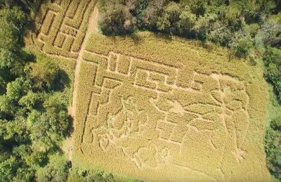 2016-jellystone-corn-maze-cave-city-kentucky-pr